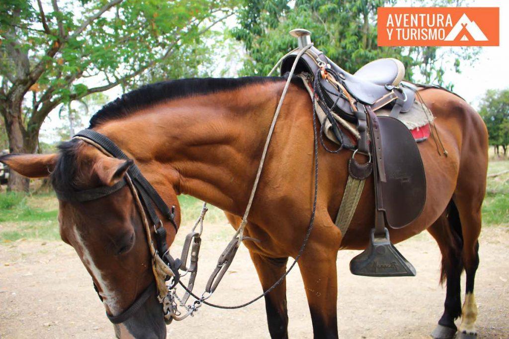 caballo yegua café para alquilar anapoima